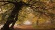 Có những khu rừng đẹp như truyện cổ tích khiến du khách nấn ná mãi chẳng về