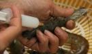 'Bí kíp' cực đơn giản để phân biệt tôm bơm tạp chất và tôm sạch