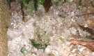 Clip: Cận cảnh trận mưa đá kinh hoàng càn quét Mộc Châu