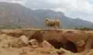 Ninh Thuận như một sa mạc trong đại hạn nắng nóng, khô hạn kỷ lục