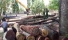 Vụ trùm gỗ lậu Phượng 'râu': Khởi tố bị can, tạm giam một Đội trưởng Đội kiểm lâm cơ động