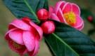 6 loại hoa nhất định phải có trong dịp Tết Nguyên Đán 2019 để xua tai đón lộc