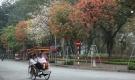 Phố phường Hà Nội đẹp như tranh vẽ mùa cây thay lá