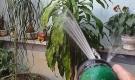 Thái Bình: Hai vợ chồng bị điện giật tử vong khi tưới cây