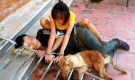 Bắt 10 'cẩu tặc' trộm hơn 40 con chó trong 1 đêm