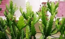 Đầu năm trồng cây lấy lộc chớ dại chọn 3 loại này mà tán gia bại sản, vợ chồng ly tán