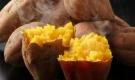 Khoai lang giàu dinh dưỡng tốt cho sức khỏe nhưng ăn theo cách này gây hại cho hệ tiêu hóa