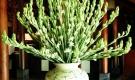 Thắp hương ngày Rằm tháng 8 cứ dùng 5 loại hoa này là Thần Tài 'ưng bụng', tài lộc ùn ùn kéo tới