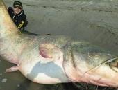 http://xahoi.com.vn/thuy-quai-da-tron-khong-lo-nang-127kg-bi-tom-gon-203597.html