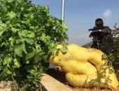 http://xahoi.com.vn/cu-cai-khong-lo-dai-12-met-va-nang-khoang-14-kg-207973.html