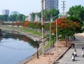 http://xahoi.com.vn/anh-song-to-lich-dep-la-mua-phuong-vi-no-hoa-227558.html