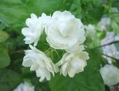 http://xahoi.com.vn/nhung-loai-hoa-tuyet-doi-khong-dat-tren-ban-tho-246431.html