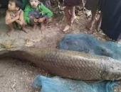 http://xahoi.com.vn/bat-duoc-ca-amazon-khong-lo-gia-33-ty-dong-o-myanmar-254081.html