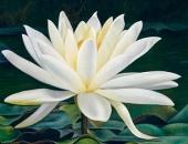 http://xahoi.com.vn/10-loai-hoa-dep-nhat-the-gioi-khien-ai-cung-muon-ngam-nhin-254744.html