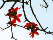 http://xahoi.com.vn/chum-anh-thang-3-mua-hoa-gao-nao-long-nguoi-di-xa-255628.html