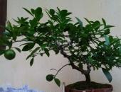 http://xahoi.com.vn/neu-trong-nha-khong-co-cay-nay-dam-bao-ban-se-hoi-han-vo-cung-259961.html