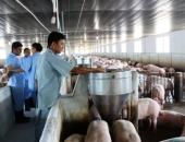 http://xahoi.com.vn/gia-lon-heo-hom-nay-227-mot-tuan-chao-dao-quanh-moc-40000-dkg-271499.html