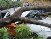 TP.HCM: Cô gái kêu cứu trong ô tô bị cây cổ thụ đè bẹp