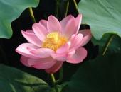 http://xahoi.com.vn/di-qua-mua-ha-nho-thuong-hoa-sen-thanh-nha-283839.html