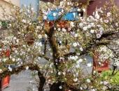 http://xahoi.com.vn/mai-trang-quy-gay-soc-voi-gia-tram-trieu-tai-cho-hoa-tet-dat-co-do-292179.html