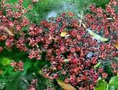 http://xahoi.com.vn/hoa-loc-vung-no-rung-trai-tham-mat-ho-guom-296989.html