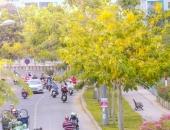 http://xahoi.com.vn/nao-long-truoc-nhung-con-duong-hoa-vang-dep-hut-hon-duoi-nang-sai-gon-299552.html