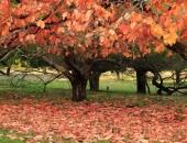 Không ngờ mùa thu tại xứ sở Kangaroo lại đẹp như chốn thần tiên thế này