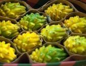 http://xahoi.com.vn/gia-chat-1-trieu-dongkg-thanh-long-vang-trung-tet-322809.html
