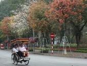 http://xahoi.com.vn/pho-phuong-ha-noi-dep-nhu-tranh-ve-mua-cay-thay-la-323890.html