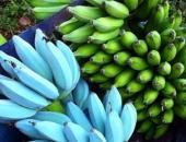 Chuối xanh da trời vị kem vani giá 2 triệu/nải khiến nhiều thực khách phát cuồng