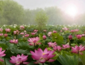 http://xahoi.com.vn/15-triet-ly-tham-thia-ve-cuoc-doi-cang-doc-cang-tinh-ngo-335893.html