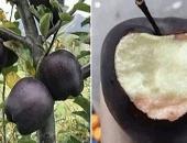 Giới nhiều tiền chi nửa triệu bạc mua một trái táo 'đen như than'