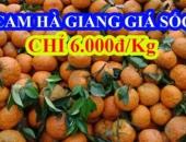 https://xahoi.com.vn/he-lo-su-that-ve-cam-sanh-ha-giang-6k-tran-lan-khap-pho-368772.html