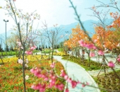https://xahoi.com.vn/rung-hoa-dao-duoc-gioi-tre-san-lung-dip-83-368969.html