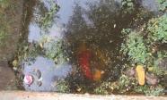 Tây Ninh: Phát hiện 2 thi thể dưới mương nước