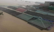 Những hình ảnh 'thắt ruột' trong trận đại hồng thủy ở Quảng Bình