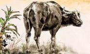 Tử vi năm 2021: 3 con giáp xui xẻo nhất năm Tân Sửu, hung hiểm luôn rình rập cần hết sức thận trọng