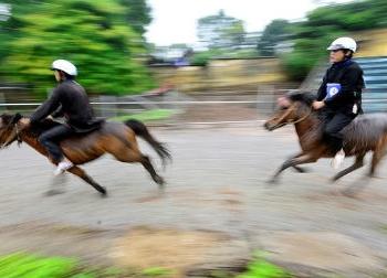 35 chú ngựa Bắc Hà tung vó trên đường đua