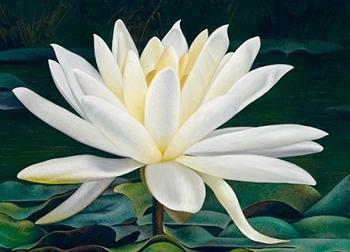 10 loại hoa đẹp nhất thế giới khiến ai cũng muốn ngắm nhìn