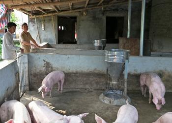 Giá lợn hôm nay 27.7: Miền Bắc 30.000-35.000 đ/kg, Đồng Nai giữ giá, Trung Quốc nhập lợn lại