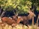 Xây dựng công viên động vật hoang dã hơn 7.350 tỷ