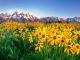 Cảnh tuyệt đẹp vào mùa xuân ở công viên quốc gia Mỹ