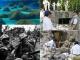 Khai quật hang động chôn sống 2600 binh sĩ trong Chiến tranh thế giới thứ 2