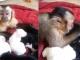 Khoảnh khắc ấm lòng 'khỉ mẹ' vuốt ve đàn cún nhỏ