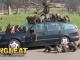 Loài khỉ tinh quái và chiêu trò 'phá' xe ô tô