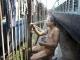 Nắng nóng 48 độ C giết chết hơn 500 người Ấn Độ