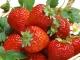 8 loại hoa quả giúp chống nắng