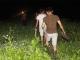 Hàng trăm người xuyên đêm lùng nghi phạm giết 4 bà cháu