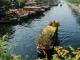 Hình ảnh tuyệt đẹp về những chuyến thuyền hoa cập bến Bình Đông