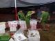 Phát hiện một cơ sở ở Hà Nội bơm tạp chất vào tôm chết rồi tuồn ra tiệc cưới